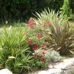 plantes_bassin